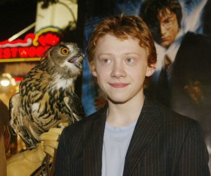 ACTOR RUPERT GRINT AND OWL AT HARRY POTTER PREMIERE